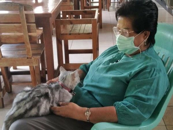 """""""มีเพชร"""" แมวแสนรู้ขึ้นนวดท้องและขาให้เจ้าของ เรียกว่าอยู่เป็น รู้งาน (ชมคลิป)"""