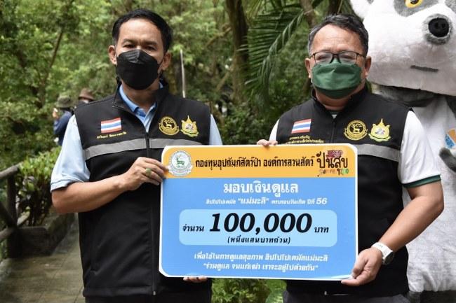 """ฉลองวันเกิด """"แม่มะลิ"""" ครบ 56 ปี ฮิปโปสวนสัตว์เปิดเขาเขียว ขวัญใจคนไทย รับเค้กผลไม้ยักษ์ และเปิดให้เที่ยวชมแล้ว"""